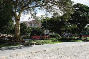 Mulateiro da Praça Heliodoro Balbi - Instituto Durango Duarte
