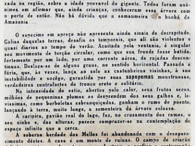 A samaumeira do Ayapuá, de Agnello Bittencourt
